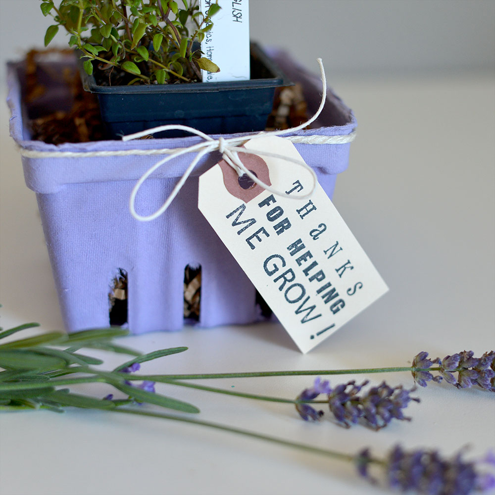 Berry Baskets Lavender Plant Gift DIY